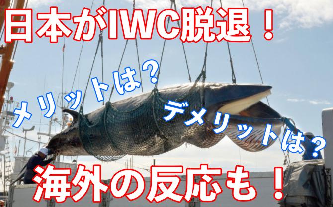 IWC脱退のメリット・デメリットは?日本への影響と海外の反応についても!