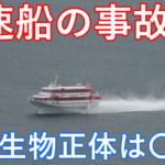 【速報!】高速船が衝突した場所はどこ?何の海洋生物にぶつかったのか!