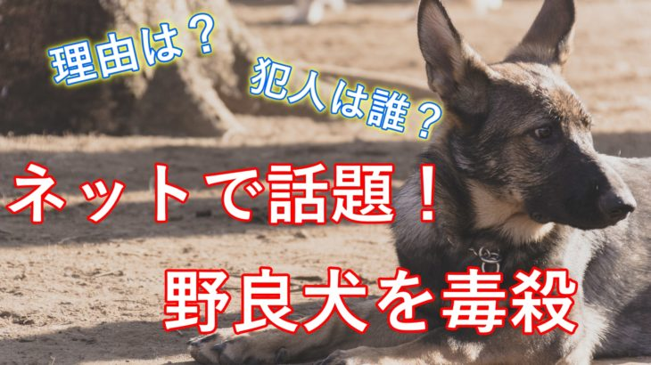 【悲惨】岡山県で野良犬が毒殺された理由は?犯人はだれ?犯罪になるのか調査!