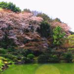 桜を見る会の問題点をわかりやすく簡単に解説!参加者や歴史についても紹介!
